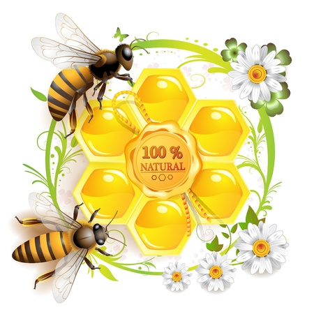 Two bees and honeycombs over floral background isolated on white  Vectores