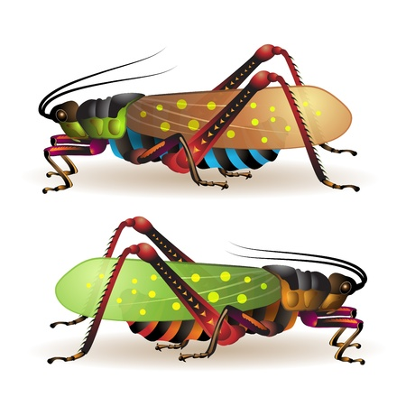 Grasshopper isolated on a white background  Vector