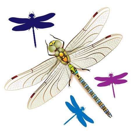 Dragonfly op een witte achtergrond