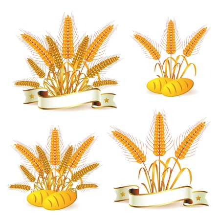 Wheat ears with ribbon and bread  Vector