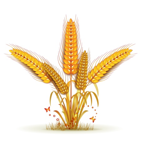 grain fields: Wheat sheaf arrangement Illustration