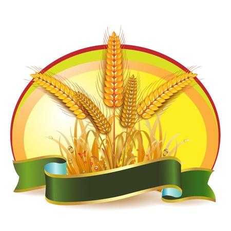 golden field: Wheat ears with ribbon