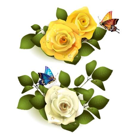 yellow roses: Rosas con mariposas sobre fondo blanco Vectores