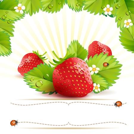 Aardbei met bladeren en label met lieveheersbeestje
