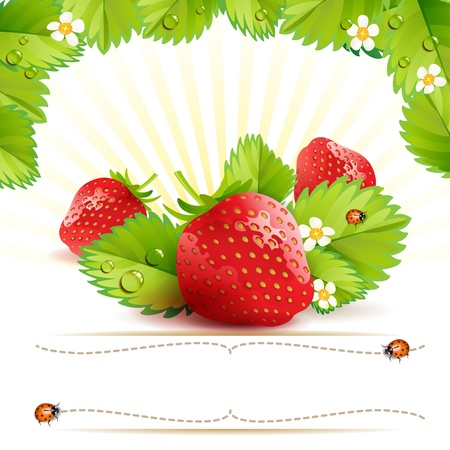 Strawberry with leafs and label with ladybug Vector
