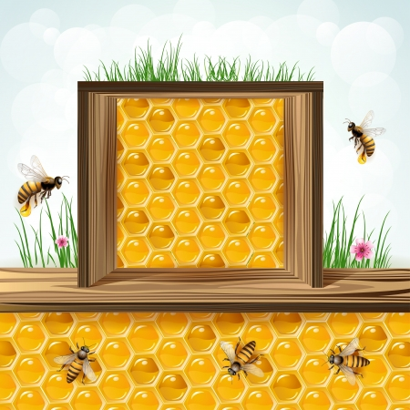 bee on white flower: Frame with bees and honeycombs
