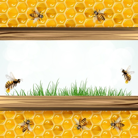bee on white flower: Landscape frame with bees and honeycombs