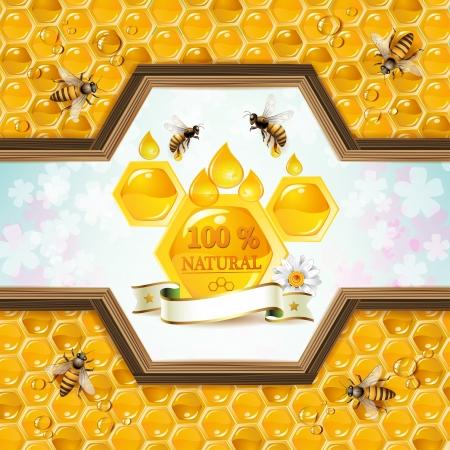 miel de abeja: Marco de madera con panales de miel Vectores