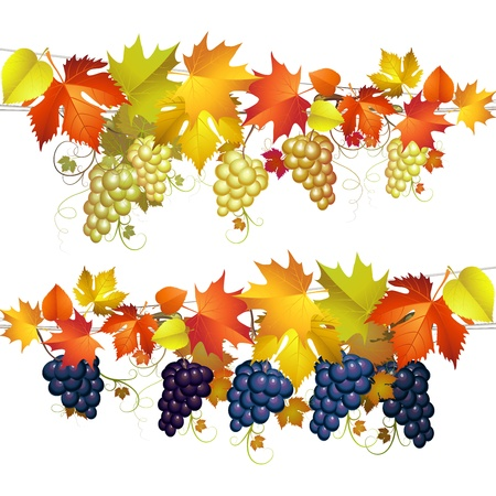Autumn colorful leaves and grapes over white
