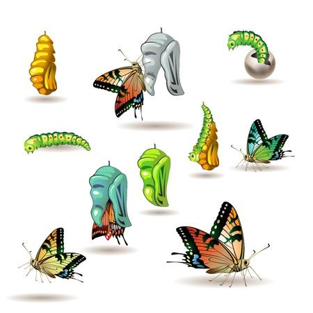 origen animal: Etapas de la mariposa con capullo en el fondo blanco