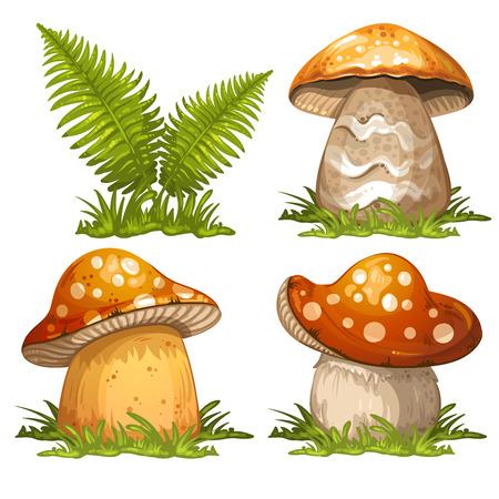 ferns: Mushrooms and ferns