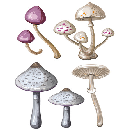 the fungus: Different mushrooms on white