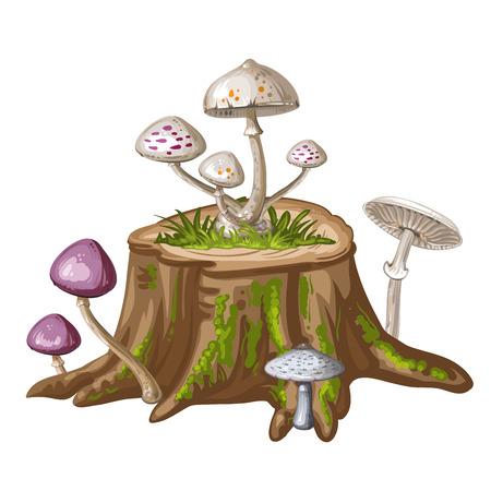 the fungus: Mushroom on cut tree trunk