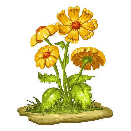 calendula: Beautiful bouquet of flower