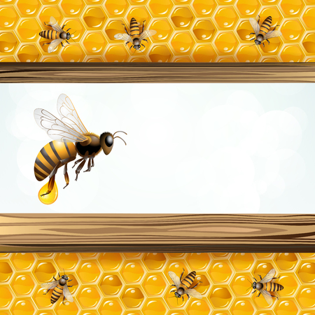 Bees and honeycombs in colorful illustration.