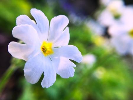 white: White Little flower