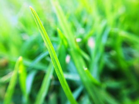 up: Close up Grass