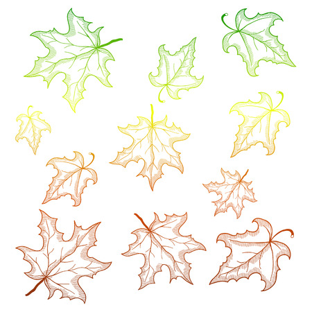 country side: Falling maple leaves. Vector background with gradient outlines. Illustration