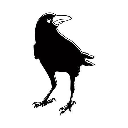 crows: silhouette of a crows in different positions. vector illustration