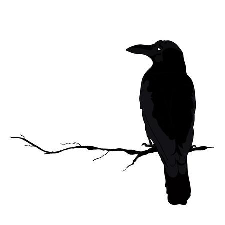 silhouette d'un corbeaux dans différentes positions. illustration vectorielle