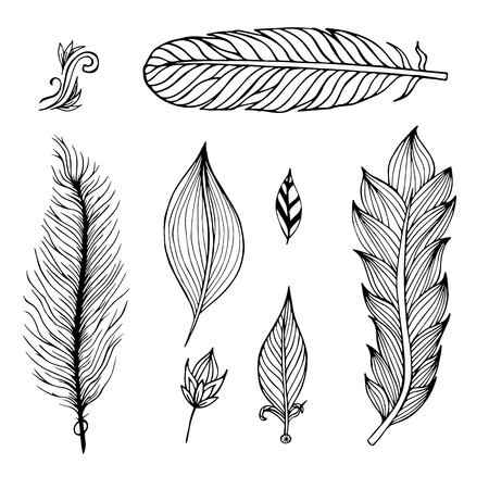 poet: Set of hand drawn feathers on the isolated background. Vector illustration.