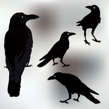cuervo: silueta de un cuervos en diferentes posiciones. ilustraci�n vectorial Vectores
