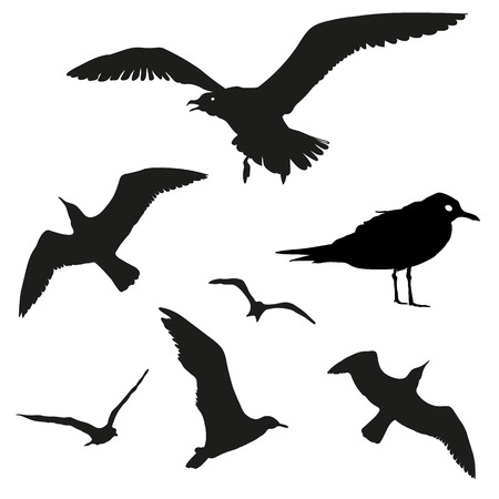 webbed: Vector set - seagull silhouette on white background. Gulls in different positions isolated on white.