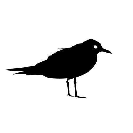 Seagull Bird black silhouette isolated on white background.  illustration