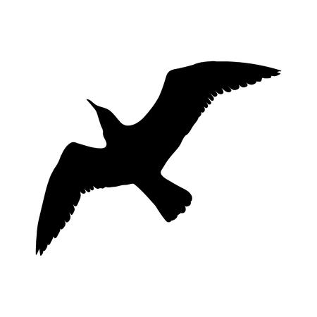 Flying Seagull Bird black silhouette isolated on white background.  illustration. Stock Photo