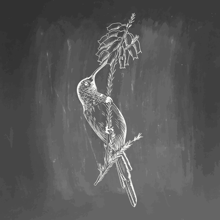 Hummingbird. White bird sketch isolated on black background.  drawing of colibri for greeting card, invitation, print, web project. Hand drawn illustration. Blackboard and chalk board imitation