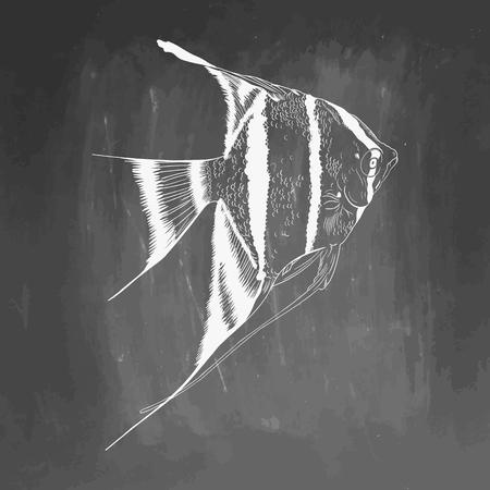 Hand Drawn Aquarium Fish Sketch. Elements isolated on chalkboard.  illustration. EPS 10