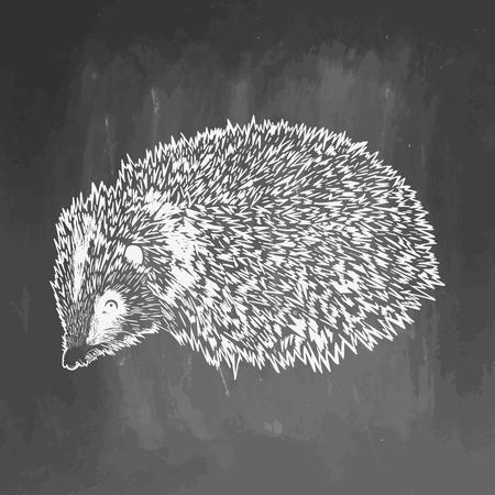 Realistic hedgehog drown on chalkboard.  illustration on blackboard. Animal sketch. EPS 10.  drawing of animal for greeting card, invitation, print, web project. Hand drawn illustration 스톡 콘텐츠