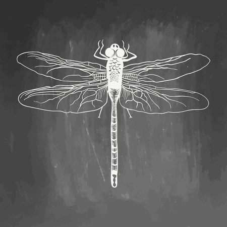 Dragonfly. Beauty insect. Hand drawn  stock illustration. Chalk board drawing. White realistic sketch on blackboard and chalkboard imitation for greeting card, invitation, print, web project