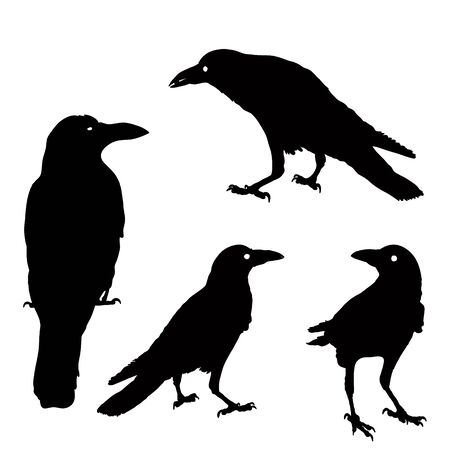 silhouette of a crows in different positions. vector illustration. black ravens on grey. Isolated. rook illustration. Vetores