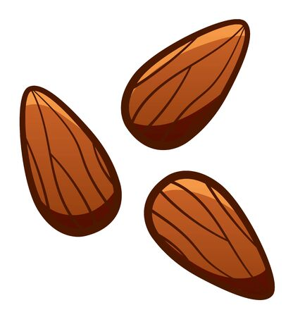 Cartoon style three brown almond nuts isolated illustration. White background, vector.