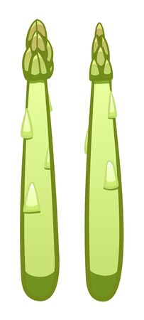Green cartoon style asparagus isolated illustration. White background, vector.