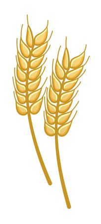 Cartoon style wheat isolated illustration and decoration. White background, vector.