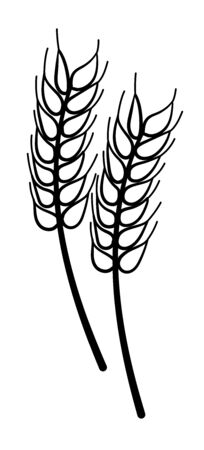 Cartoon style wheat in black lines isolated illustration for  decoration. White background, vector.