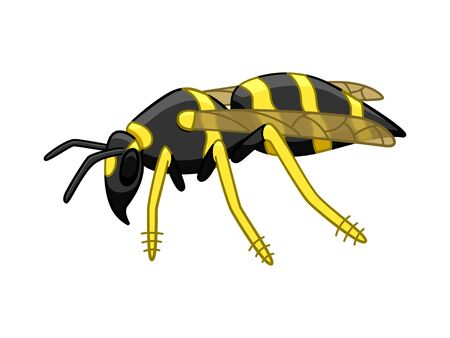 Cartoon style side view wasp isolated illustration. White background, vector.