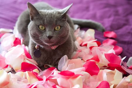 flowers cat: A cat lying on a bed of petals.