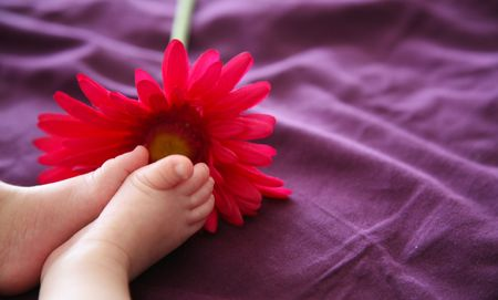 Babys feet near a pink daisy, on a purple background.