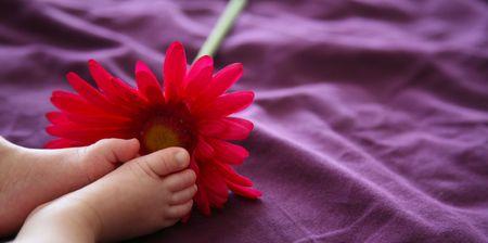 赤ちゃんの足の近くに、ピンクのデイジーは、紫色の背景に。 写真素材