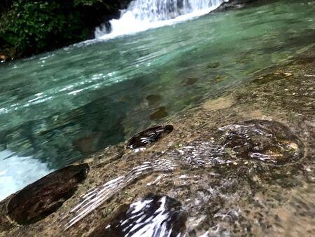 Natural pools in Barahona, Dominican Republic Banco de Imagens