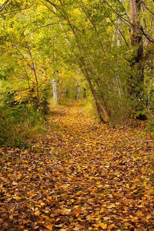 wooded path: Path