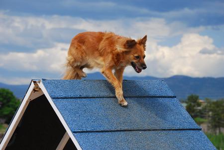 dog agility: Dog Agility: A-frame Stock Photo