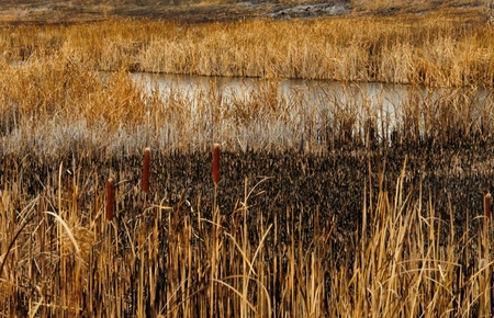 prescribed: Prescribed burn in wetland habitat