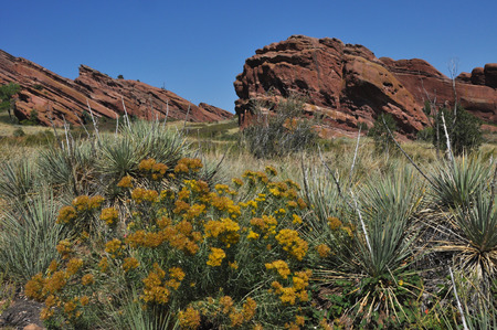 red rocks: Red Rocks Landscape with yucca Stock Photo