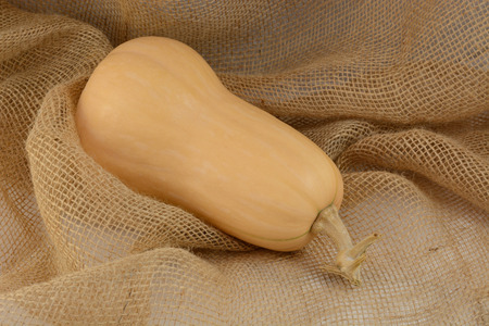 butternut: Raw whole uncooked butternut squash on burlap