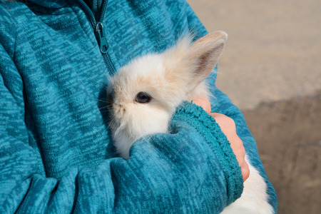 lionhead: Young woman holding baby lionhead rabbit in her arm