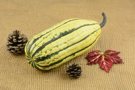 Raw whole delicata or sweet potato squash on burlap with autumn decorations